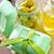 el · yapımı · sabun · yeşil · nane · yaprakları · damla - stok fotoğraf © tycoon