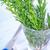 alecrim · galho · isolado · branco · folha · verde - foto stock © tycoon