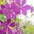 közelkép · fotó · tavasz · természet · szépség · növény - stock fotó © tycoon
