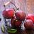 pears stock photo © tycoon