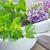 friss · szárított · növénygyűjtemény · aroma · gyógynövény · levél · gyógyszer - stock fotó © tycoon