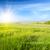 Daisy · campo · de · flores · puesta · de · sol · frescos · soleado · primavera - foto stock © tycoon