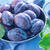 fresh plums stock photo © tycoon