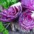 Салат · синий · капуста · продовольствие · вилка · обед - Сток-фото © tycoon