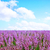 primavera · campo · de · lavanda · planalto · França · paisagem · viajar - foto stock © tycoon