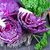 lahana · salata · yaprak · restoran · mısır · kahvaltı - stok fotoğraf © tycoon