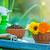 colorido · flores · jardín · herramientas · mesa · de · madera · aislado - foto stock © tycoon