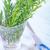 ローズマリー · 小枝 · 孤立した · 白 · 葉 · 緑 - ストックフォト © tycoon