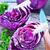 белый · капуста · кислая · капуста · продовольствие · обеда - Сток-фото © tycoon