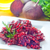 carotte · nouvellement · augmenté · laisse · blanche · nature - photo stock © tycoon