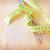 спагетти · совета · горизонтальный · продовольствие · фон - Сток-фото © tycoon
