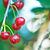 rouge · cerise · bol · vert · été · printemps - photo stock © tycoon