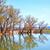 природы · озеро · воды · дерево · трава · лес - Сток-фото © tycoon
