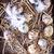 tojások · fészek · rusztikus · fából · készült · copy · space · természet - stock fotó © tycoon