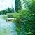 湖 · ツリー · 草 · 日没 · 背景 · 緑 - ストックフォト © tycoon