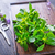 fresh herb stock photo © tycoon