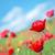 フィールド · ケシ · 青空 · 花 · 春 · 草 - ストックフォト © tycoon
