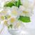 jasmim · flor · folha · fundo · verde · planta - foto stock © tycoon