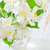 jasmim · primavera · folha · fundo · verde · planta - foto stock © tycoon