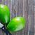 taze · avokado · meyve · arka · plan · yeşil · damla - stok fotoğraf © tycoon