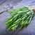 аромат · травяной · продовольствие · природы · зеленый - Сток-фото © tycoon