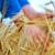 пшеницы · стороны · небе · солнце · природы - Сток-фото © tycoon