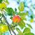 csoport · érett · almák · fa · kész · aratás - stock fotó © tycoon