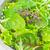 friss · saláta · egészség · háttér · zöld · növény - stock fotó © tycoon