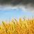 bom · pôr · do · sol · dourado · colheita · macio · foco - foto stock © tycoon