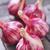 sarımsak · ampul · yalıtılmış · beyaz · yaprak · bitki - stok fotoğraf © tycoon