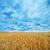 небе · солнце · природы · облаке · цвета - Сток-фото © tycoon