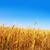 良い · 日没 · 収穫 · ソフト · フォーカス - ストックフォト © tycoon