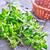 orégano · jardín · planta · cocina · comer · Bush - foto stock © tycoon