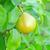 citromsárga · levelek · gyümölcsök · fa · természet · levél - stock fotó © tycoon