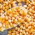 dry corn stock photo © tycoon