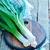 pırasa · tam · kare · gıda · bitki · arka - stok fotoğraf © tycoon