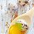 tyúk · tojások · felső · kilátás · tálak · dekoratív - stock fotó © tycoon