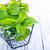 ramo · de · natureza · verde · medicina - foto stock © tycoon