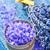 sal · marina · lavanda · mesa · mar · verde · medicina - foto stock © tycoon