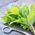 аромат · травяной · жареный · мяса · овощей · древесины - Сток-фото © tycoon