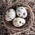 yumurta · çim · gökyüzü · bahar - stok fotoğraf © tycoon
