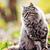 gato · de · volta · preto · gatos · gatinho · macro - foto stock © tycoon