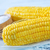 фон · зеленый · кукурузы · сельского · хозяйства · растительное - Сток-фото © tycoon