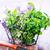 bio · gyógynövények · étel · fotózás · tavasz · levél - stock fotó © tycoon