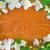 hermosa · flores · flor · hoja · jardín · verano - foto stock © tycoon