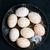 tavuk · yumurta · plaka · tablo · doğa - stok fotoğraf © tycoon