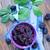 BlackBerry · фон · цвета · еды - Сток-фото © tycoon