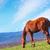 природы · лошади · области · небе · весны · пейзаж - Сток-фото © tycoon
