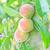 brilhante · suculento · fresco · ramo · vermelho · groselha - foto stock © tycoon
