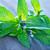 vers · groen · blad · geïsoleerd · witte · voedsel · blad - stockfoto © tycoon